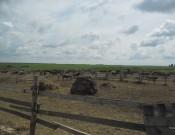 Проверка сельскохозяйственного кооператива «Вихра» выявила ряд нарушений