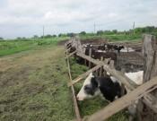 О проверках животноводческих предприятий Брянской области