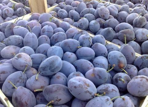 Россельхознадзор не впустил в Россию очередную партию фруктов из Молдовы Одна родина