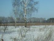В Стародубском районе ликвидированы свалки