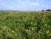 Земли сельскохозяйственного назначения зарастать не должны