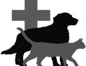 О возобновлении обращения лекарственного препарата для ветеринарного применения