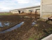 О частичной приостановке деятельности двух навлинских животноводческих хозяйств