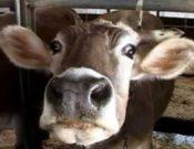 Об усилении ветеринарного контроля в целях недопущения заноса ящура