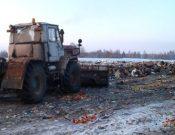Об уничтожении более 116 тонн растительной продукции