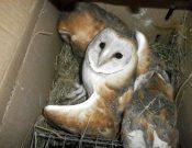Молдавские совы не прошли контроль