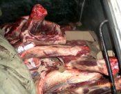О запрете ввоза охлажденной говядины белорусского происхождения