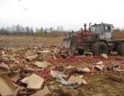 Об уничтожении растениеводческой продукции