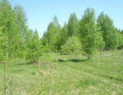 О выявлении в Брянской области 52 гектаров заросших сельскохозяйственных земель