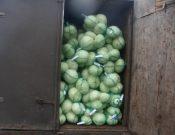 Саженцы декоративных растений и капуста, перевозимые без документов, возвращены экспортерам