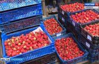 Видео: Контроль фруктов и ягод на смоленских рынках, ГТРК «Смоленск»