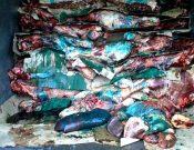 В Смоленской области денатурирована говядина, перевозившаяся с нарушениями ветеринарных требований