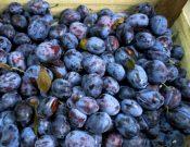 Запрещен ввоз молдавских слив, зараженных восточной плодожоркой