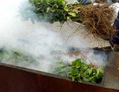 Саженцы смородины неизвестного происхождения уничтожены в Смоленской области