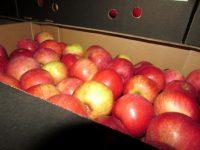 О возврате 35 тонн яблок белорусскому отправителю в связи с недостаточностью сведений относительно происхождения продукции