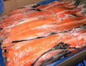 О запрете ввоза около 37 тонн норвежской рыбной продукции, перевозимой с нарушением условий транзита