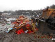 В Смоленской области утилизировано более 2 тонн запрещенной к ввозу растительной продукции
