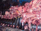 В Брянской области утилизировано мясо неизвестного происхождения