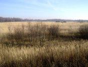 За зарастание земель сельскохозяйственного назначения собственнику придется заплатить крупный штраф