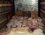 О попытке незаконного ввоза мяса говядины неизвестного происхождения