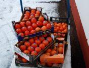 В Смоленской области выявлена запрещенная к ввозу растительная продукция