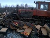 Об уничтожении 19 тонн подкарантинной продукции