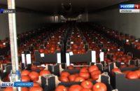 Видео: На Смоленщине уничтожили партию подозрительных овощей, сюжет ГТРК «Смоленск»