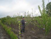 О некоторых итогах работы в области внутреннего карантина растений в 2017 году