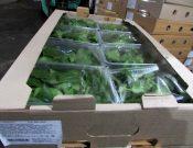 О новых схемах мошенничества при ввозе в Россию зеленых овощей из Республики Беларусь