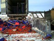 Об утилизации на полигонах твердых бытовых отходов Брянской и Смоленской областей более 50 тонн различной подкарантинной продукции