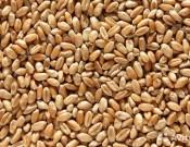 О результатах работы в сфере контроля за качеством и безопасностью зерна и продуктов его переработки в первом квартале 2018 года