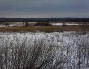 В ходе административного обследования в Брянской области выявлены зарастающие земли сельскохозяйственного назначения