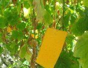 О предстоящих обследованиях тепличных хозяйств в Брянской и Смоленской областях