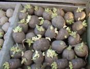 Сельхозпредприятие в Брянской области нарушило требования законодательства о семеноводстве