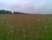 МУП МТС «Рогнединская нива» использует некачественный семенной материал