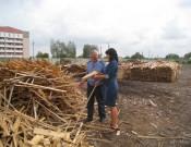 Брянское лесоперерабатывающее предприятие не соблюдает  карантинный фитосанитарный режим