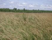 Три гектара земель фермерского хозяйства «Огонек» выбыли из сельскохозяйственного производства