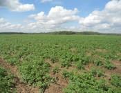 О неисполнении смоленским сельхозпроизводителем требований законодательства в сфере семеноводства