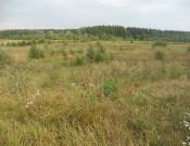Более 40 га дорогобужской земли заросли сорной растительностью