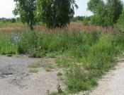 Два гектара почепских земель «свободны» от свалки