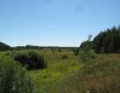 А в Выгоничском районе на 19 га сельскохозяйственных земель по-прежнему выращивают бурьян