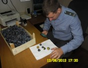 Фрукты из Испании и Молдовы прибыли вместе с карантинными объектами