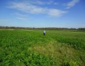 О нарушениях в сфере семеноводства и карантина растений