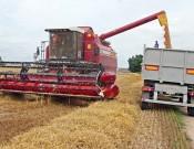 В Брянской области убрано 90 процентов зерновых и зернобобовых культур
