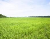 О несоблюдении смоленским кооперативом обязательных требований в сфере карантина растений