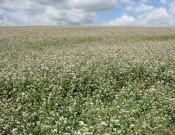 Нарушения в сфере семеноводства