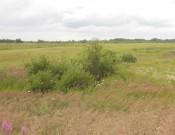 Россельхознадзор  наводит порядок на землях сельскохозяйственного назначения