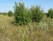 Контроль целевого использования земель сельскохозяйственного назначения