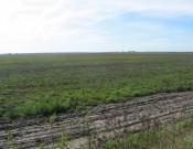 О нарушениях земельного законодательства