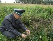 О наложении карантина по повилике тимьяновой в Руднянском районе Смоленской области